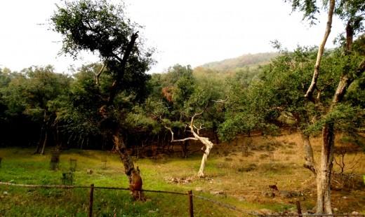 Kamad Giri Hill 3