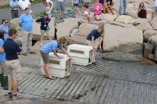 Seal Release Narragansett RI