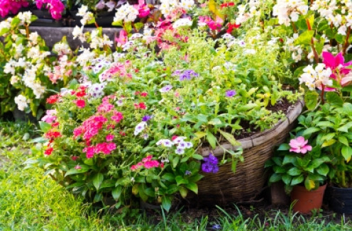 pots, hanging baskets and full borders make for a lovely garden