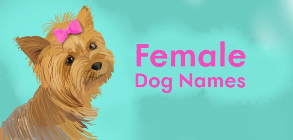 A Dog Named Bean