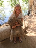 Billabong Sanctuary - Hold Koalas and Wombats and Feed Kangaroos
