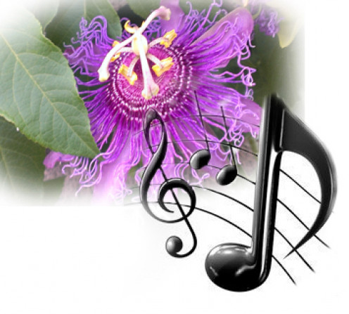 effects of music on the growth Music can greatly influence the growth of plants in the present paper, the effect of music was studied on the growth of the selected plant – mung.