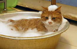 Essential Shampoos for cats help keep their health and fur looking as great as possible