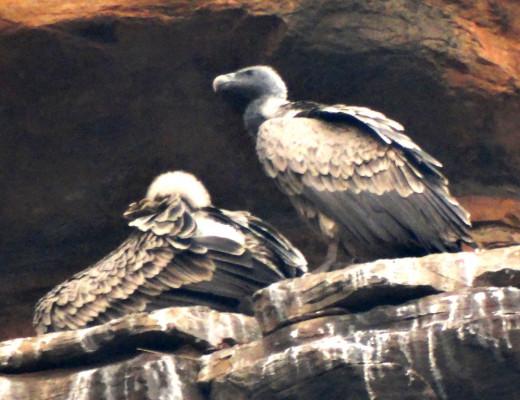 A Rock vulture in the hill at Sati Anusuya