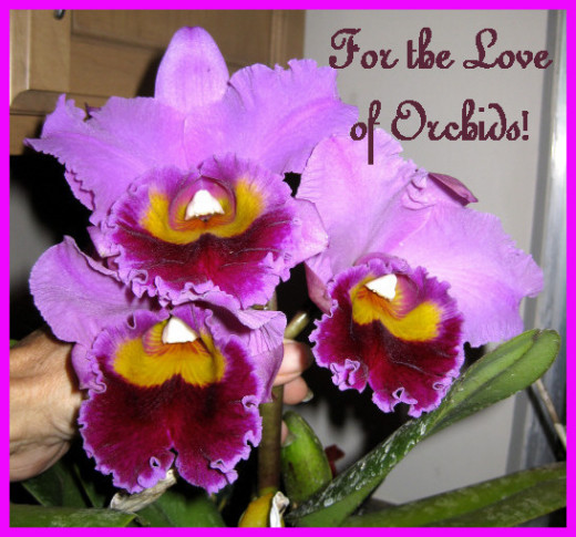 Three of our lovely orchids