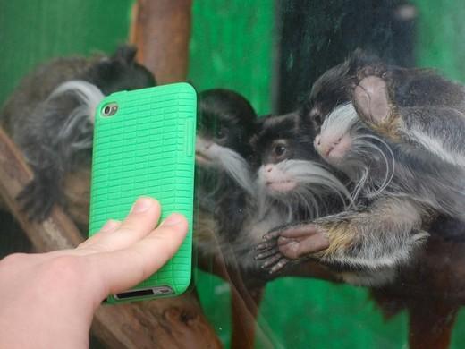 These baby tamarins enjoy selfies.