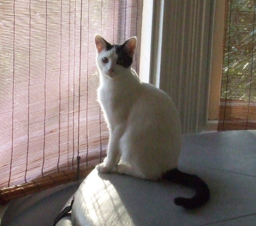 Wow - warm sunlight and interesting sights for a kitten to see from the window.