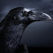 JDCrow profile image