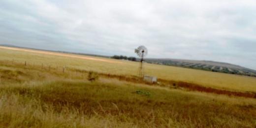 Corn fields, West Coast Peninsula, South Africa