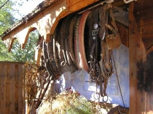 Horse collars in the harness shop