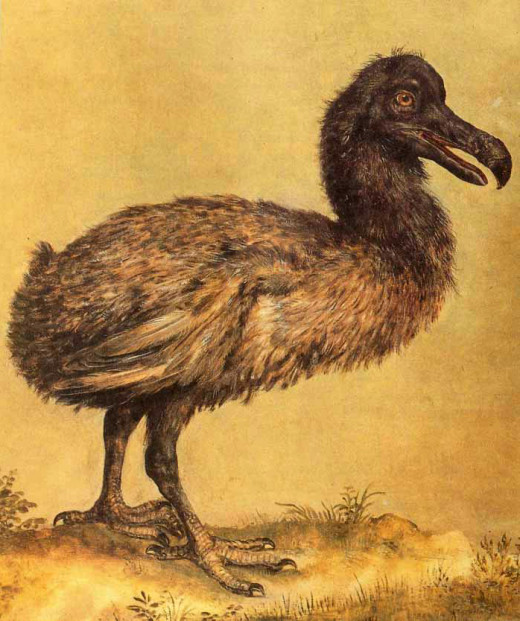An early 1600s painting of a dodo