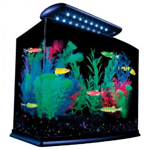 Best fish tank kits and aquariums for Kit aquarium