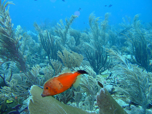 Hard Coral Reefs