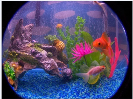 Best Fish Tank Kits And Aquariums Hubpages
