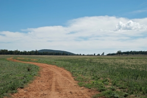 A dirt road runs through a pasture