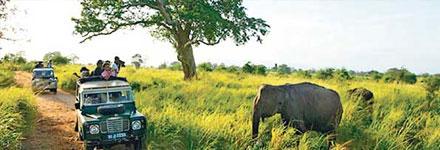 Safari takes you to the real wildlife