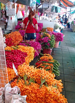 Orchid bundles at a flower stall