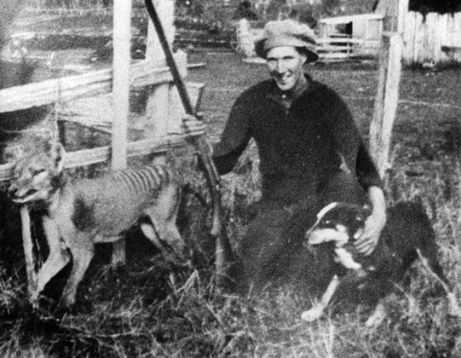 The last Tasmanian tiger shot in the wild