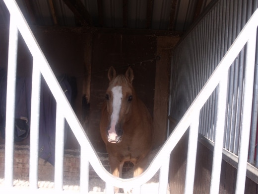 A favourite horse, stabled close to our previous home where Al helped with mucking out and exercising every Sunday morning. The horses were rescued by our friend Caroline who deserves some recognition for years of caring for abused horses.