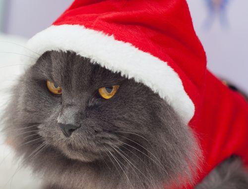 Christmas, bah humbug!