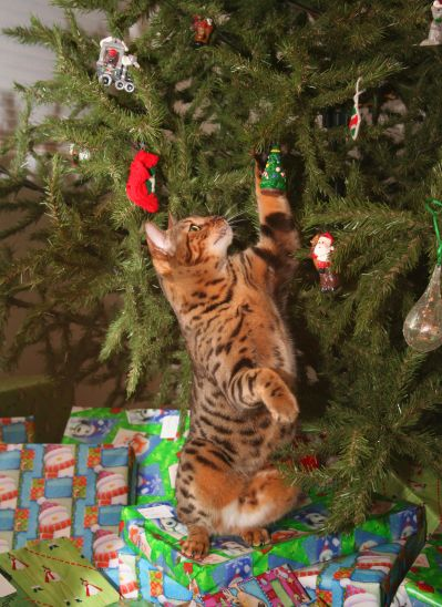 Cats must NOT play with Christmas trees