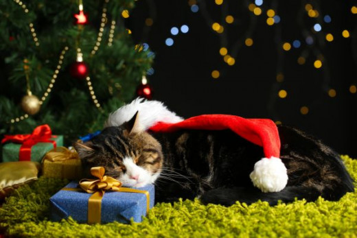 Safe Snooze under the Christmas Tree