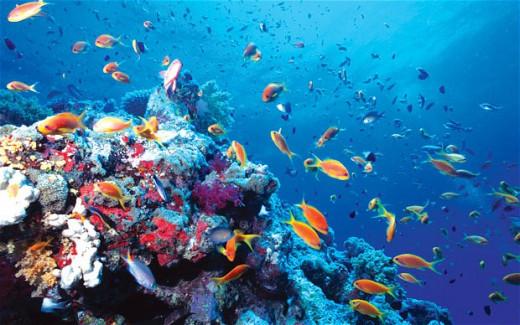 Underwater Ocean shot.