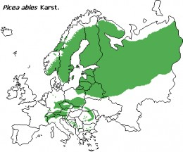 The natural range of the Norway spruce (Picea abies).