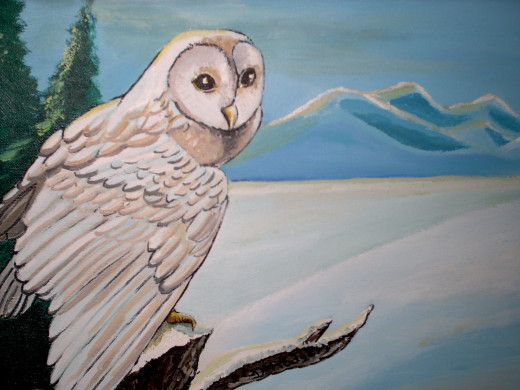 Snow Owl watches...