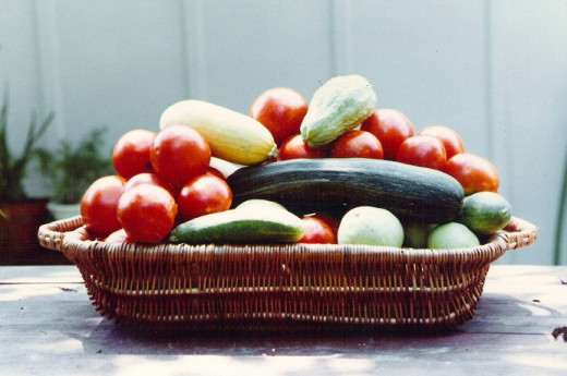 This harvest includes tomatoes, mirlitons, cucumbers and also yellow and zucchini squash.