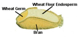The structure of a wheatberry