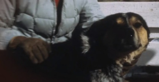 Shep - The dog that saved the black-footed ferret