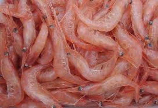 Chitosan originates from chitin in shellfish