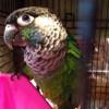 Chelsie N profile image