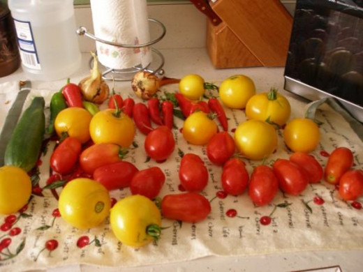 A variety of tomatoes freshly harvested from my garden