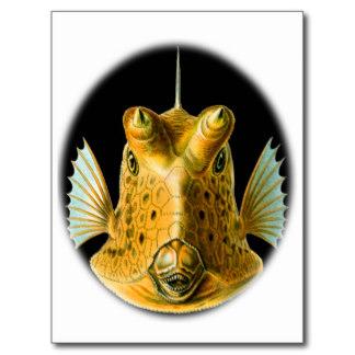 cowfish by Haeckel