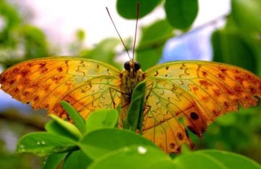 Orangestad Butterfly in Butterfly Garden