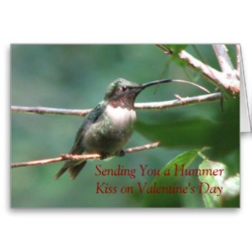 This Ruby-throated hummingbird looks like it is sending a sloppy hummer kiss. Hummingbird males are beautiful, but do not help the female raise the young. He's more of a love them and leave them kind of guy.