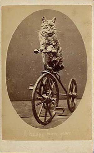 A photo of a cat on a bicycle from the 1870's.  So cute, and wishing the recipient a Happy New Year!