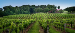 North Fork Vineyard Tour: Long Island Wine Tasting