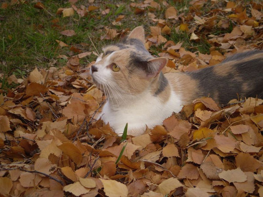 My cat playing in the leaves in my garden.