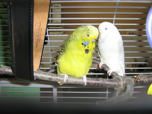 Woody tells Ozzie he's in the mood!  Perhaps we will soon announce an egg!