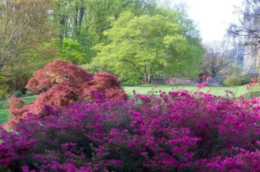 Biltmore Shrub Gardens
