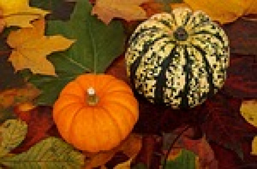 """Just like these gourds, your hubs will eventually start to go """"stale"""" and will no longer be viewed."""