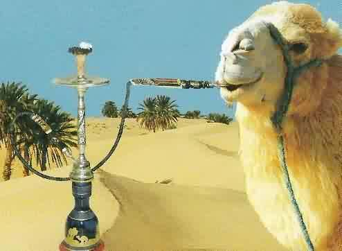 The hookah is the smoke of choice among some of our most staunch allies, where oil apparently buys you more friends than cigars.