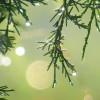 maryjenga11 profile image