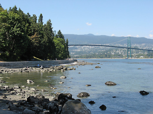 A view in Stanley Park