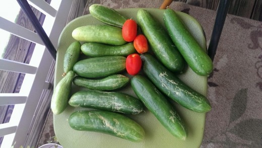 here is my first really big batch of cucumbers that I got, along with some of the roma tomatoes I got off my tomato plant.