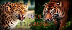 Exotic Pet Statistics | Lion, Tiger, and Big Cat Attacks and Fatalities in the United States (1990-2014)
