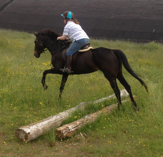During re-schooling a horse afraid of jumping makes a big step forward when she chooses to jump calmly over a small log